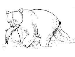 grizzly bear coloring pages coloring bears