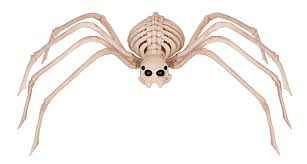 Plastic Halloween Skeletons Amazon Com Crazy Bonez Skeleton Spider Toys U0026 Games