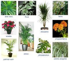 plantes d駱olluantes chambre les plantes intérieures dépolluantes ou les placer clg création