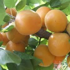 get cheap specialty trees aliexpress alibaba