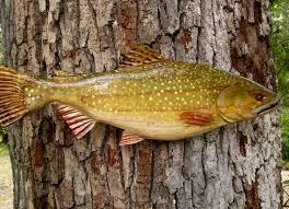 Cabin Decor Lake Trout 28