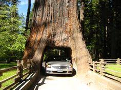 Chandelier Drive Through Tree David Elliott Lifesroadsigns On Pinterest