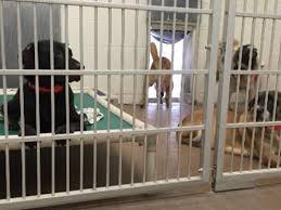 humane society black friday adopt a pet for free from arizona humane society through nov 28