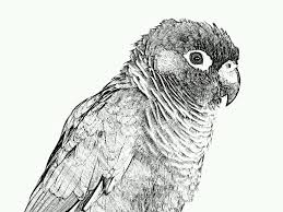 lily lee sketch guru and paper artist app on samsung camera