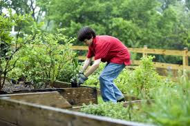 free picture boy planting vegetables garden