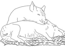 coloring graceful pigs coloring pages 01