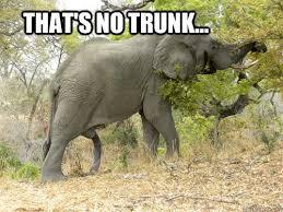 Elephant Meme - til elephant memes quickmeme