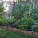 backyard raised vegetable garden ideas uqsfajkr decorating clear