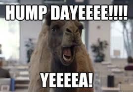 Camel Memes - hump day memes