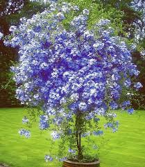 956 best ornamental trees plants and shrubs images on