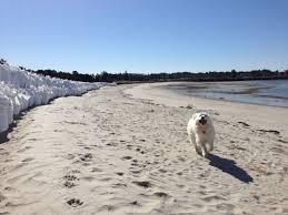 walks with dogs portland maine