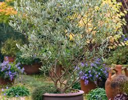 where to buy indoor plants your online indoor plants nursery