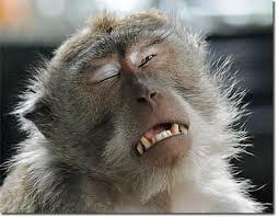 Monkey Face Meme - monkey crying meme