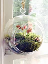 the 25 best hanging terrarium ideas on pinterest hanging plants