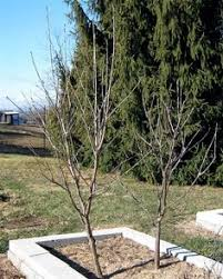 Dave Wilson Nursery Backyard Orchard by Hedgerow Dave Wilson Nursery Frutales Pinterest Gardens