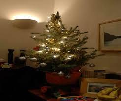 live tree for sale lights decoration