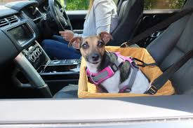 what is the safest way to travel images Dog car booster seat tutorial the safest way to travel jpg