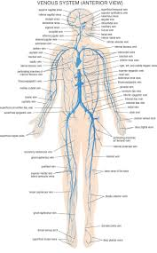 Anatomy And Physiology Nervous System Study Guide Human Nervous System Nervous System Diagram For Kids Pinterest