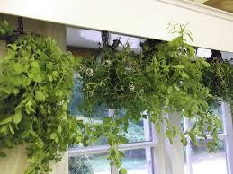 indoor herb garden ideas homesteading indoor gardening tips 17