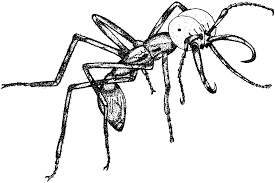 army ants trapped by their evolutionary history