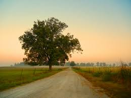 Alabama scenery images Morning view in alabama by shawna coronado jpg