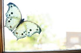 jen price there s a butterfly in my window
