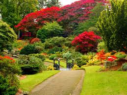 pin by nea ferreira on flowers pinterest beautiful park and
