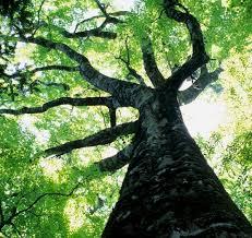 benefits of trees fulgham s inc