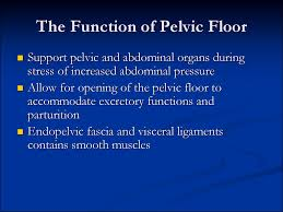 Muscles Of The Pelvic Floor Ppt by Pelvic аnatomy презентация онлайн