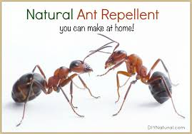 Natural Ant Killer For Kitchen by Natural Ant Repellent In Simple And Handy Spray Form