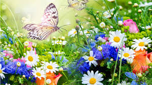 butterfly flower flowers flowers garden colorful bright butterfly daisies