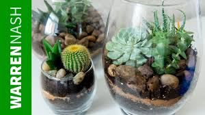 succulent planter ideas growing your first collection easy diy