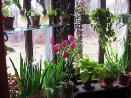 window planters indoor now in bloom february 2012