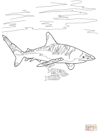 oceanic whitetip shark coloring page free printable coloring pages