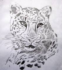 leopard sketch 301007 the urge to sketch strikes at the mo u2026 flickr