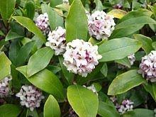 Indoor Fragrant Plants - is there an indoor plant which produces a healthy fragrance quora
