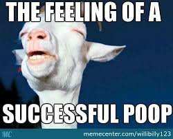 Meme Poop - successful poop by willibilly123 meme center