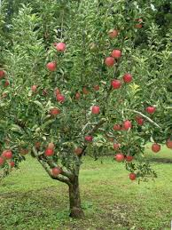zone 5 fruit trees u2013 guide to growing fruit trees in zone 5 gardens
