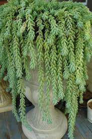 identifying indoor house plants can be a daunting task due to the