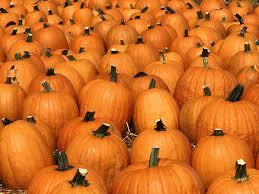 autumn pumpkin wallpaper widescreen index of library images slideshows gallery flora