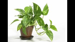 inside house plants top ten popular indoor house plants that purify air youtube