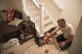 belgian sheepdog massachusetts this chesapeake man u0027s best friend may not be the nation u0027s top dog