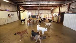 dog daycare floor plans tail command dog kennel dog day care dog boarding 2920 s