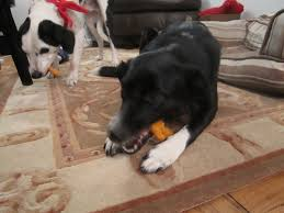 sophie in the kitchen sweet potato dog chews