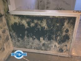 difference between mold and mildew mold mildew differences