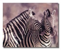 zebra bathroom ideas good zebra print bathroom decor u2013 wall art