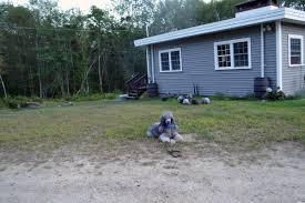 dog obedience training in ct ma ri best buddy dog training