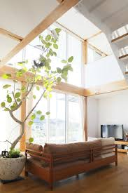 Small Indoor Trees by To Decorate A Small House With Indoor Plants