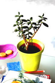 good inside plants best indoor plants good inside for small space gardening jade