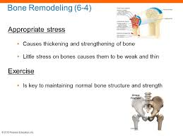 Normal Bone Anatomy And Physiology 6 The Skeletal System Ppt Download